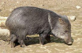 Životinje ukradene iz zoo vrta zbog hronične gladi