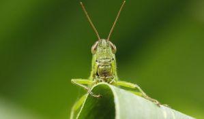 Naučnici: Planeti preti najezda gladnih insekata