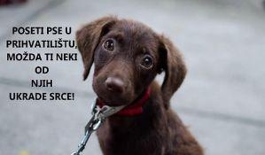 VIDEO: U Novom Sadu se najlakše udome mali i rasni psi