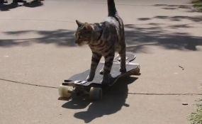 VIDEO: Mačak postavio novi rekord na skejtbordu