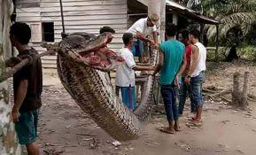 VIDEO: Džinovski piton umalo otkinuo ruku čuvaru, meštani zmiju ispržili i pojeli