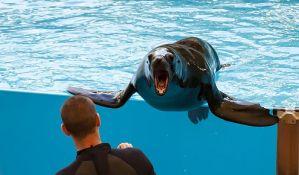 Pokušao da uplaši morskog lava, pa završio u bolnici