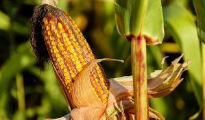 Sve što niste znali o kukuruzu i kokicama