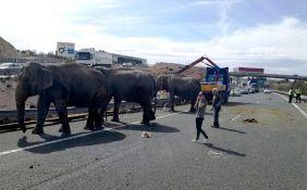 VIDEO: Nakon udesa slonovi šetali auto-putem u Španiji, uklonjeni kranom