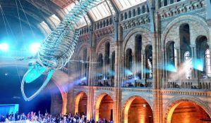 Skelet plavog kita zamenio Dipija na ulazu u Britanski prirodnjački muzej