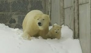 VIDEO: Prva šetnja polarnog medvedića
