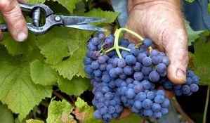 Vršac: Svislajon preuzeo Vršačke vinograde