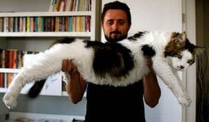 Mačak Sevki ima 7,5 kilograma i metar dužine