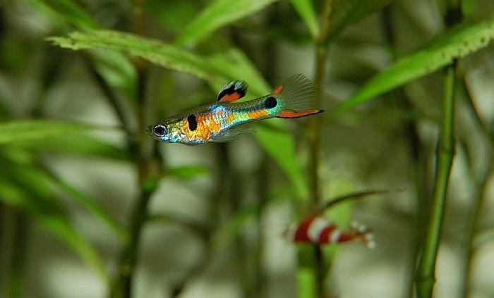 Ribe imaju karakter