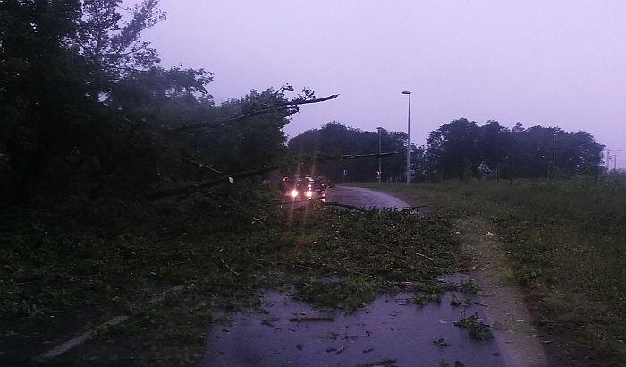 FOTO: Oluja napravila haos u Novom Sadu