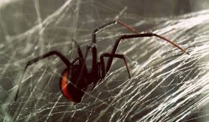 Iskočila iz kola dok je bežala od pauka