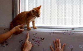 VIDEO: Pustili mačke da se šetaju vozom da bi promovisali njihovo udomljavanje