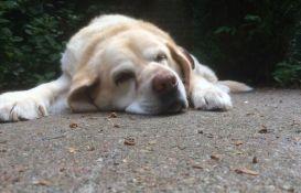 Neki psi su genetski predodređeni da budu gladni
