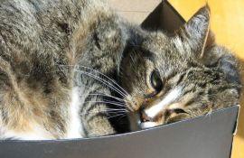 Tečne mačke osvojile anti-Nobela