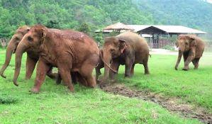 VIDEO: Krdo slonova hita da uteši slonče koje je ostalo bez mame