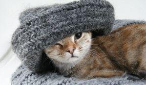 Pokušala da prokrijumčari mačku na Island, pa uhapšena a životinja uspavana