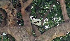 FOTO: Prijavili policiji mačku sa puškom