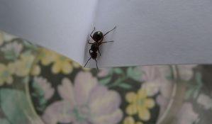 Kako da se rešite navale mrava u domu?