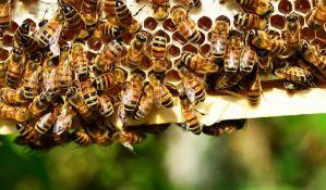 Inicijativa da se pčele proglase ugroženom vrstom