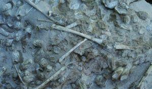 Pronađeni fosili 215 jaja pterosaurusa