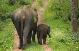 Četiri slona stradala u sudaru s vozom u Indiji