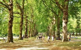 Zašto gradsko drveće raste brže od onog u divljini?