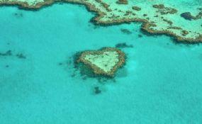 Naučnici uspeli da prebace deo korala sa Velikog koralnog grebena
