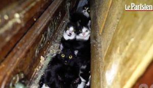 VIDEO: U stanu od 25 kvadrata držala 130 mačaka