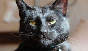 Iskren oglas za udomljavanje mačka