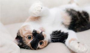 Mačke, psi i koze kao terapija protiv stresa na poslu