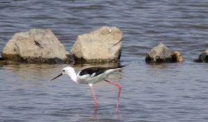 Novi Kneževac: Preduzeće kažnjeno zbog uništavanja gnezda zaštićenih ptica