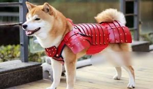 FOTO: Proizvode samurajske oklope za pse i mačke