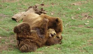 Kamp u utočištu za medvede u Kuterevu otvoren i za Novosađane