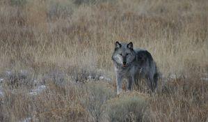 Stanovnici Splita sada u strahu i od vukova
