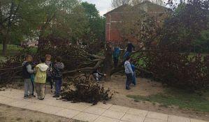 FOTO: Smetala mu graja, pa posekao omiljeno dečije drvo za pentranje