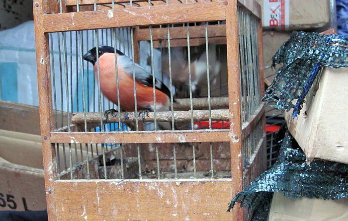 Građani pozvani da prijave hvatanje divljih ptica