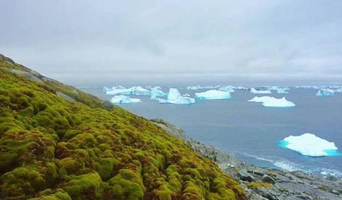 Zbog globalnog zagrevanja, Antarktik sve zeleniji