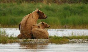 Medvedice promenile ponašanje zbog ljudi