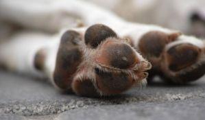 VIDEO: Pas se pravi mrtav da ne bi morao da ode iz parka