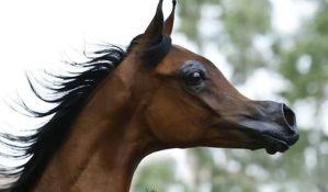 VIDEO: Ekstremnim uzgojem napravili konja nalik onom iz crtaća