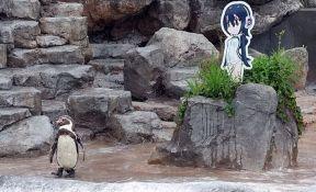 Pingvin uginuo kraj svoje ljubavi - kartonske lutke