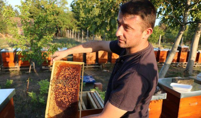 FOTO: Masovni pomor pčela kod Bačke Topole, ravno katastrofi