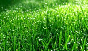 Naučnici slušaju kako trava raste