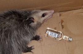 Oposum provalio u prodavnicu i napio se