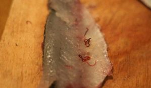 FOTO: Parazit u ribi u Dunavu, nema opasnosti po ljude