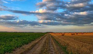 Kiše smanjile kvalitet pšenice i rod za oko 100.000 tona