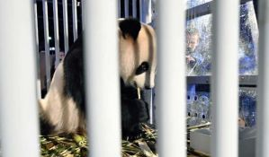 FOTO: Par pandi stigao iz Kine u Holandiju