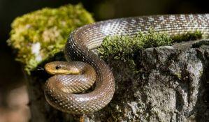 Pedeset zmija izvučeno iz šahta u Žitorađi