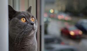 Mačka postala redovan
