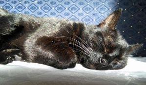 Zašto mačke ližu ljude